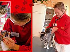 Tierarzt /-ärztin
